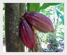 Kakao-thumb