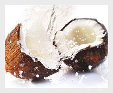 kokos-thumb